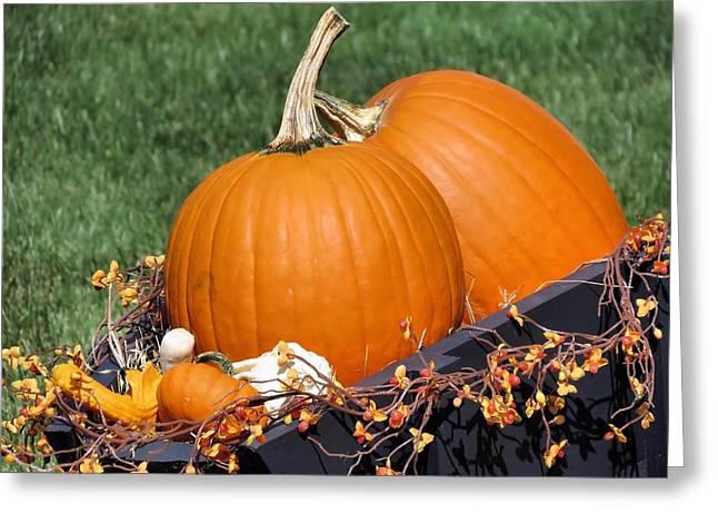 Pumpkin And Bittersweet Greeting Card