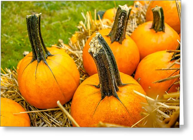 Pumpkin And Harvest Decorations For The Holidays Greeting Card