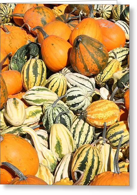 Pumpkin Field Greeting Card by Patt Nicol