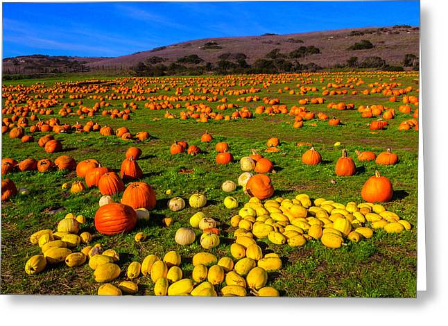 Pumpkin Field Santa Cruz Greeting Card by Garry Gay