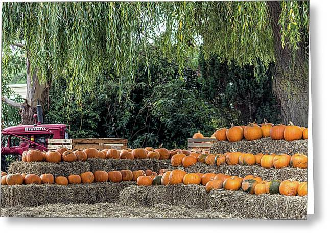 Pumpkin Harvest. Greeting Card by Angela Aird