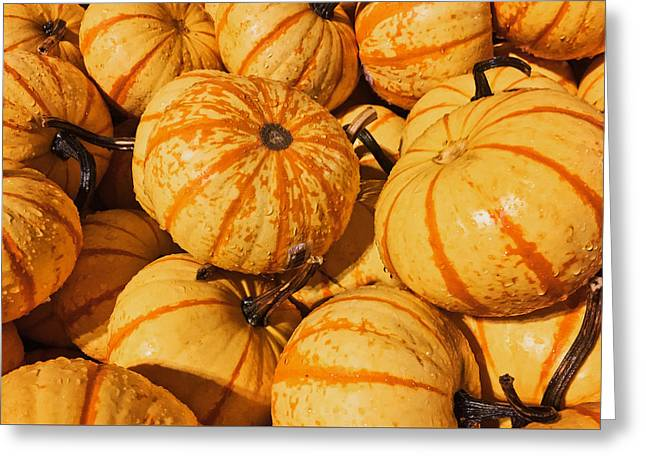 Pumpkin Harvest Greeting Card