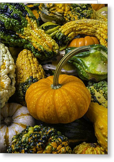 Pumpkin In The Gourds Greeting Card by Garry Gay