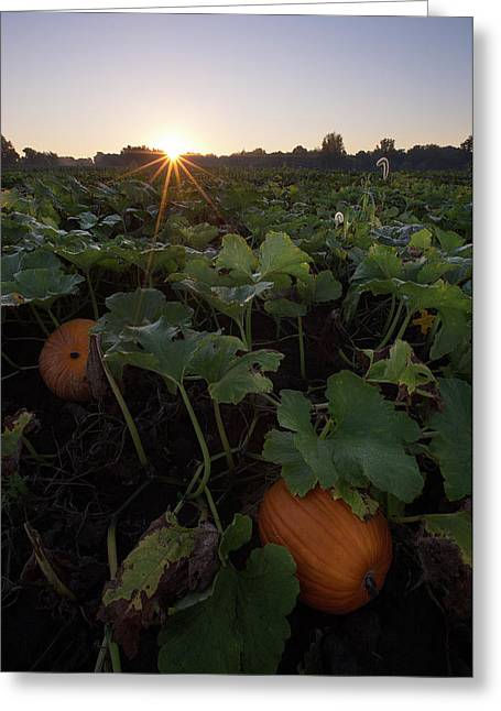 Pumpkin Patch Greeting Card by Aaron J Groen
