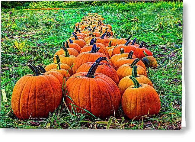 Pumpkin Patch Greeting Card by Dale R Carlson
