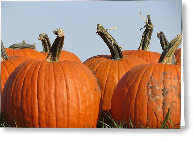 Pumpkin Patch II Greeting Card by Kyle West