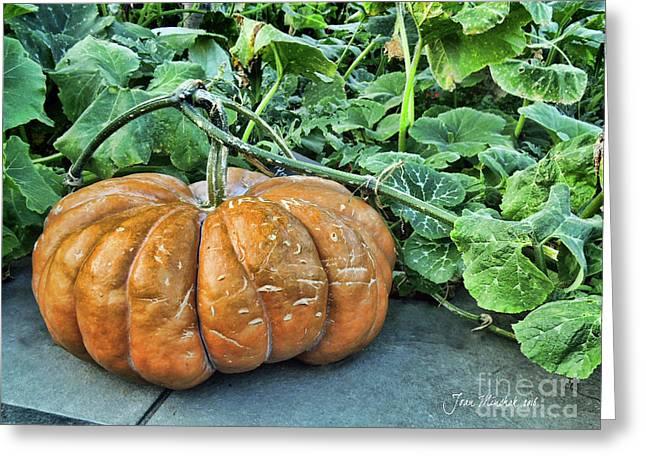 Pumpkin Patch Greeting Card by Joan Minchak