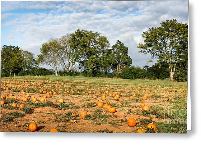 Greeting Card featuring the photograph Pumpkin Patch by Todd Blanchard