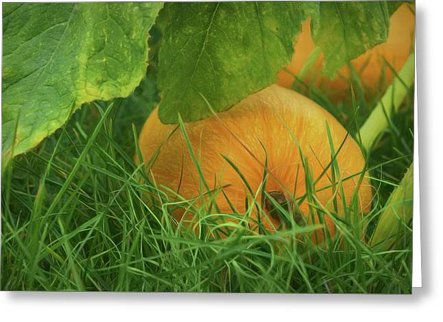 Pumpkin - Ready For Harvest Greeting Card