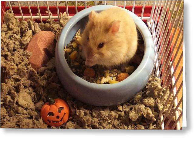 Pumpkin With Pumpkin Greeting Card
