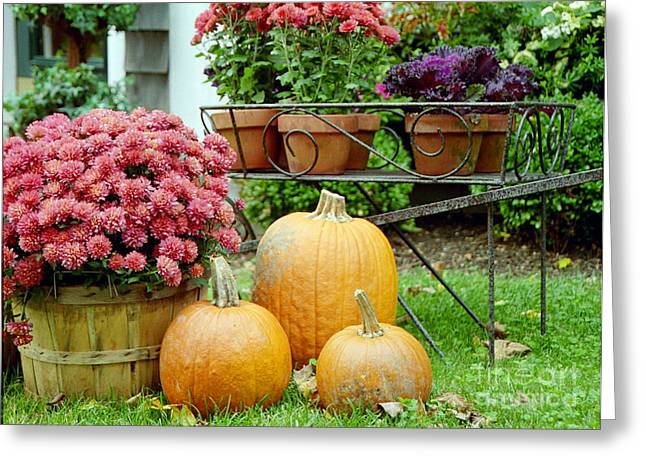 Pumpkins And Flowers Greeting Card by Linda Drown