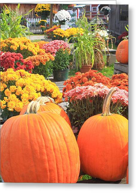 Pumpkins And Mums In Farmstand Greeting Card by John Burk