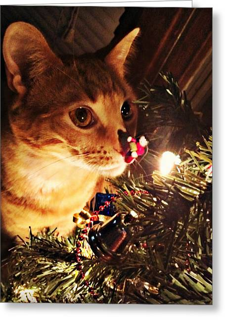 Pumpkin's First Christmas Tree Greeting Card by Kathy M Krause