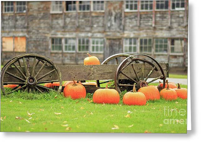Pumpkins For Sale Stowe Vermont Greeting Card