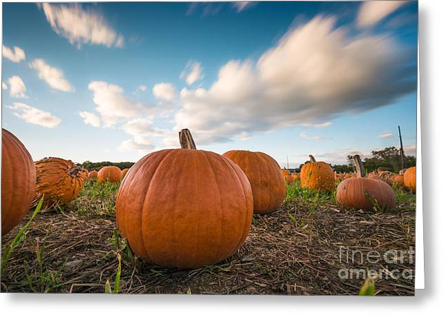 Pumpkins In Motion Greeting Card
