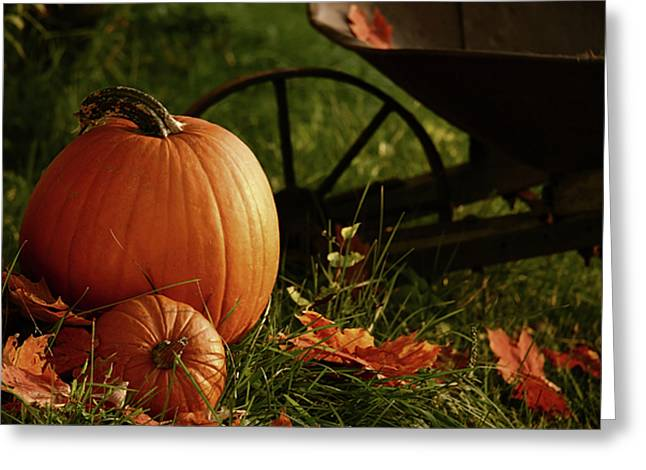 Pumpkins In The Grass Greeting Card