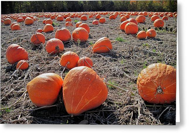 Pumpkins Of An Imperfect World Greeting Card by Mary Lee Dereske
