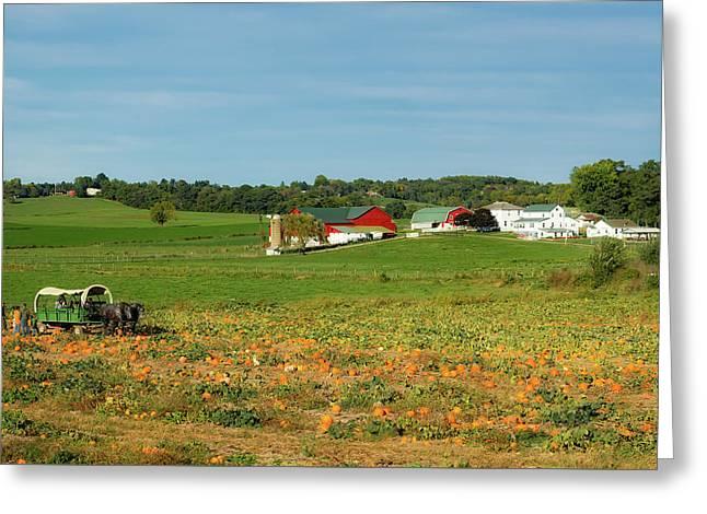 Pumpkins On An Ohio Amish Farm Greeting Card
