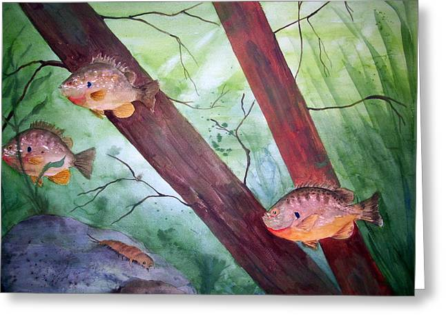 Pumpkinseed Sunfish Greeting Card