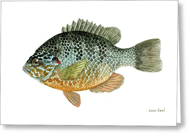 Pumpkinseed Sunfish Greeting Card by Sean Seal