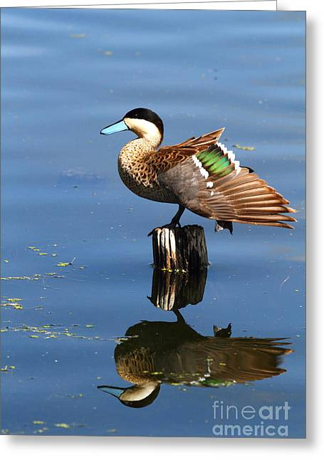 Puna Teal Reflections Greeting Card by James Brunker