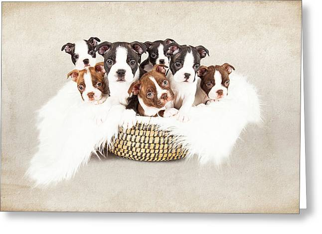 Puppies In A Basket With Textured Background  Greeting Card by Susan Schmitz