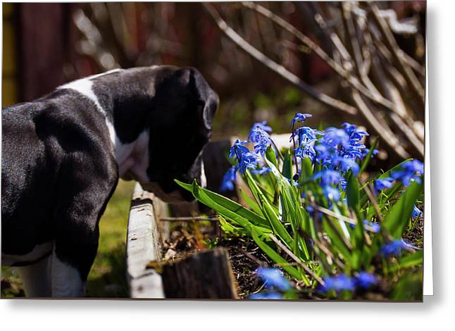 Puppy And Flowers Greeting Card