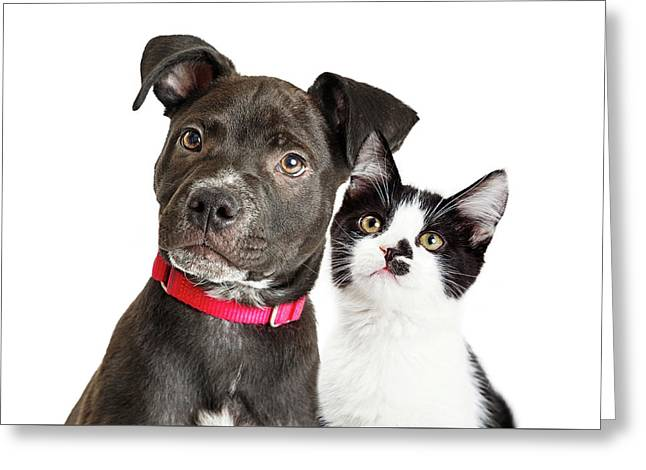 Puppy And Kitten Closeup Over White Greeting Card by Susan Schmitz