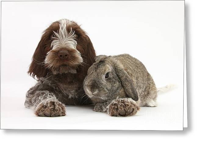 Puppy And Rabbt Greeting Card by Mark Taylor