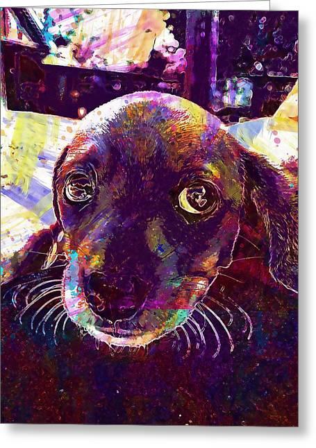 Puppy Dachshund Big Eyes Animal  Greeting Card
