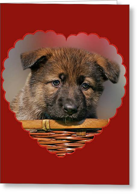 Greeting Card featuring the photograph Puppy In Red Heart by Sandy Keeton