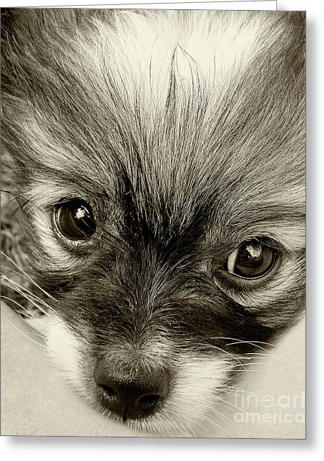 Puppy In Sepia By Kaye Menner Greeting Card by Kaye Menner
