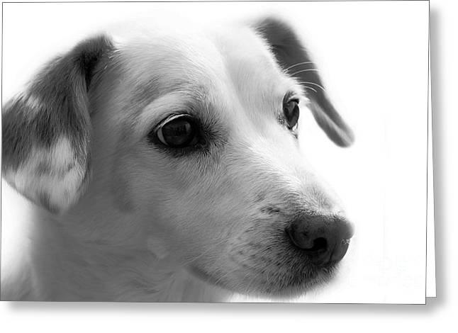 Puppy - Monochrome 4 Greeting Card