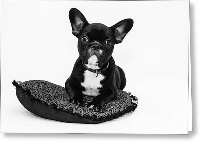 Puppy - Monochrome 5 Greeting Card