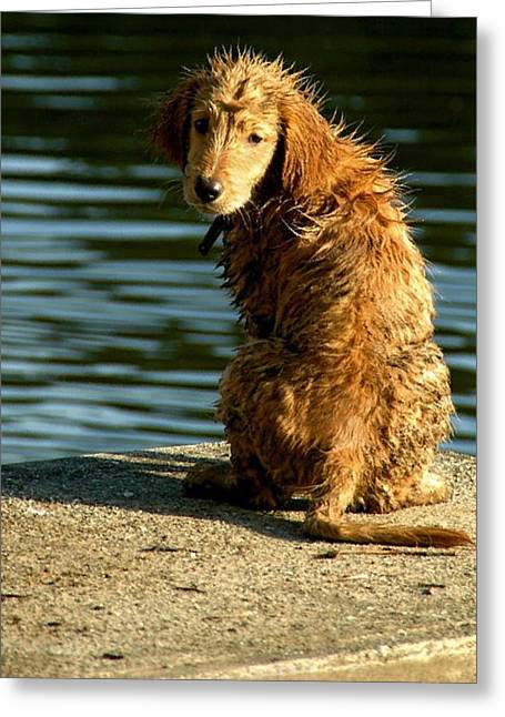 Puppy On The Pier Greeting Card by Bibi Romer