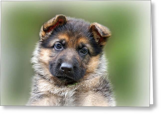 Puppy Portrait Greeting Card by Sandy Keeton