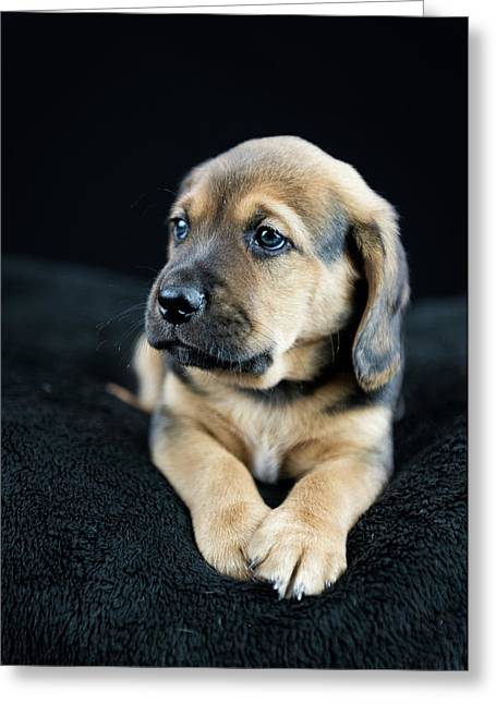 Puppy Portrait Greeting Card