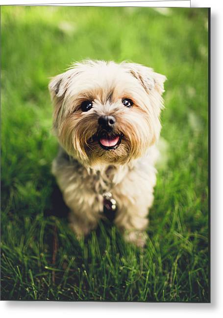 Puppy Greeting Card by Happy Home Artistry