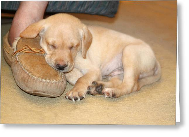 Puppy Sleeping On Daddy's Foot Greeting Card by Linda Phelps