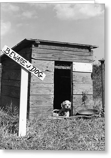 Puppy With Beware Of Dog Sign, C.1950s Greeting Card