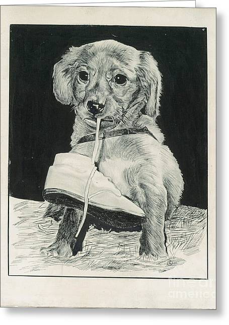 Puppy With Shoe Greeting Card by Samuel Showman