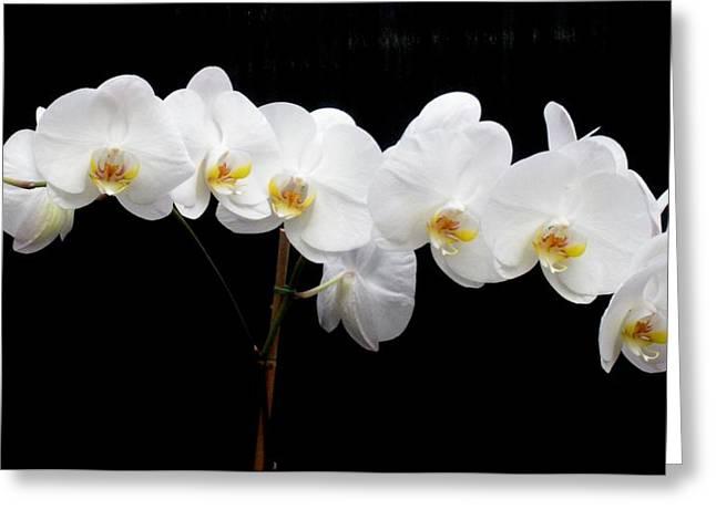 Pure Orchid Greeting Card by Jeanette Oberholtzer