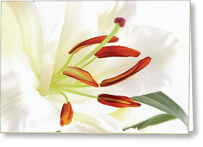Pure Tiger Lily Greeting Card