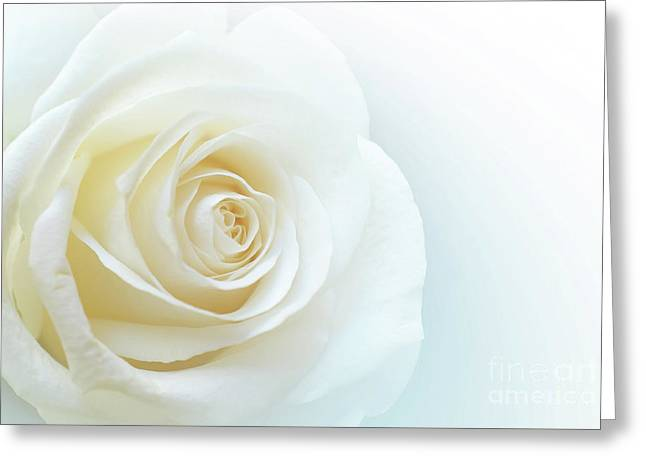 Pure White Rose Greeting Card by Carlos Caetano