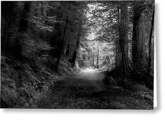 Purisima Creek Path Greeting Card by Kenneth Houk