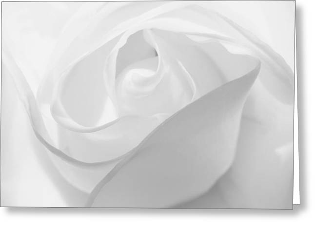 Purity - White Rose Greeting Card