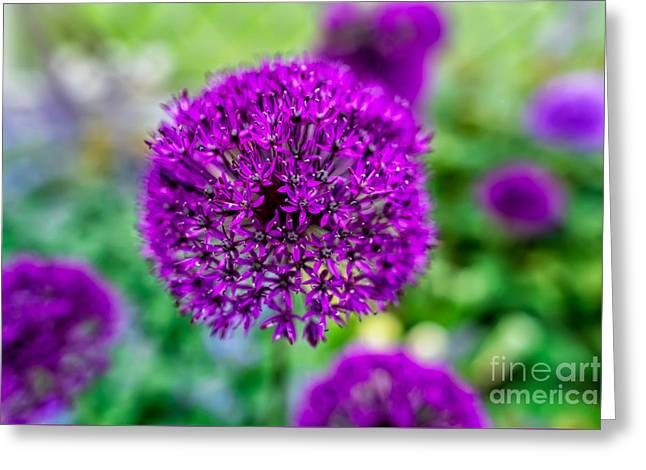 Purple Greeting Card by Adrian Evans