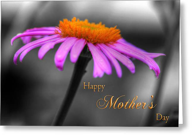 Greeting Card featuring the photograph Purple And Orange Coneflower Happy Mothers Day by Shelley Neff