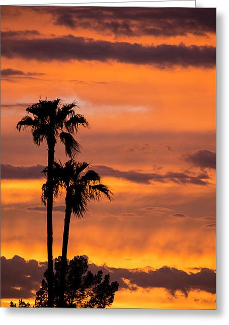 Purple And Orange Sky Greeting Card by Cathy Franklin