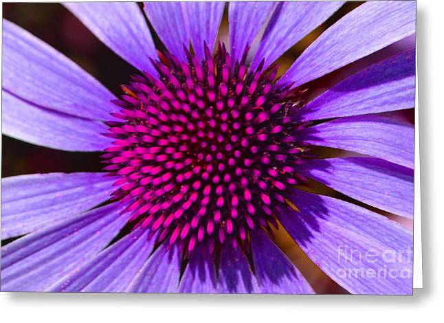 Purple And Pink Daisy Greeting Card